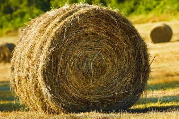 Bespovratna sredstva za poljoprivredu
