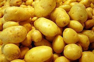 Izdašni urod eko-krumpira u Zagori