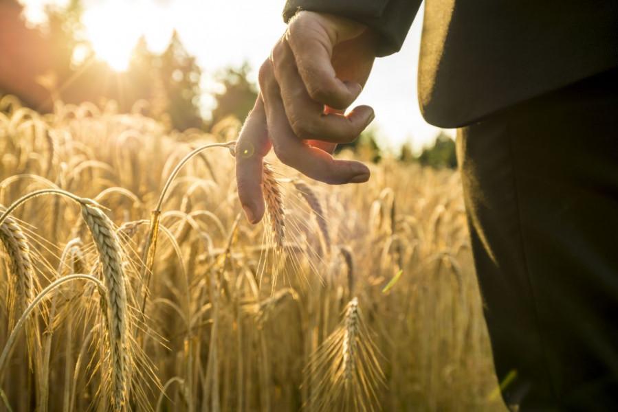 3,2 miliona KM za pšenicu i zdravlje životinja