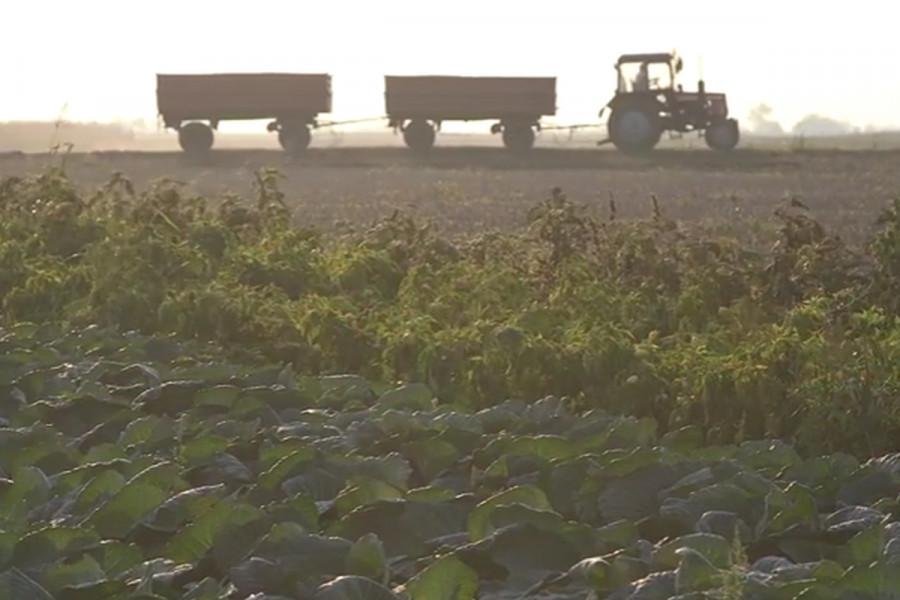 Bakterioze ugrozile prinos povrća u 2016. godini
