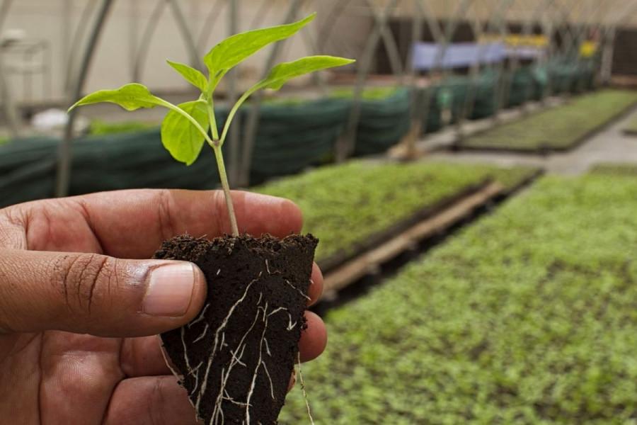 Važnost pojedinih makrohraniva u ishrani biljaka