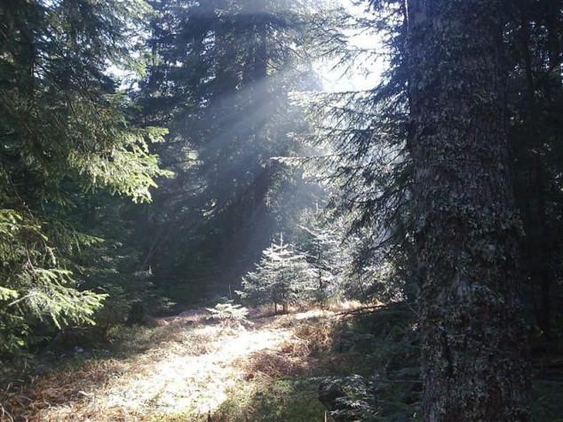Obrazovanjem do razvoja šumarstva