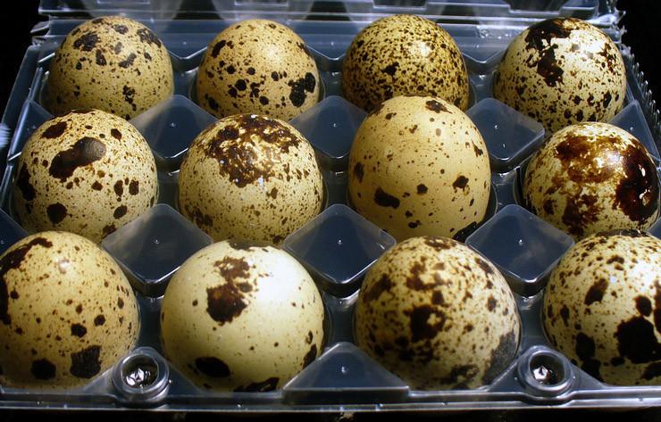 Salmonela u prepeličjim jajima