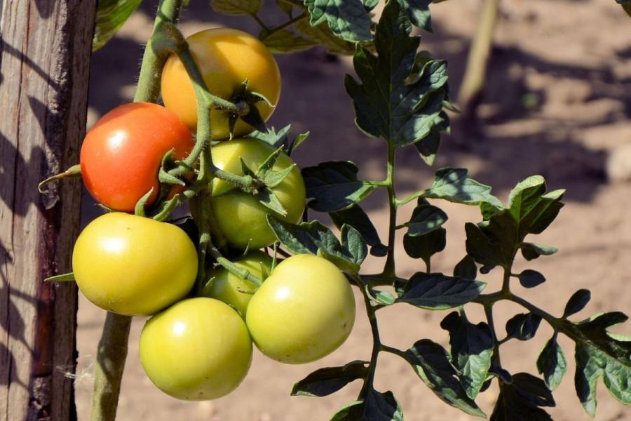 Prihrana povrća putem lista za siguran razvoj