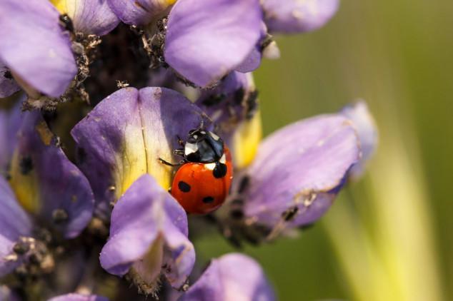 Životinje saveznici vrta - kako ih privući?