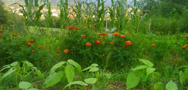 Isplanirajte vrt za narednu sezonu
