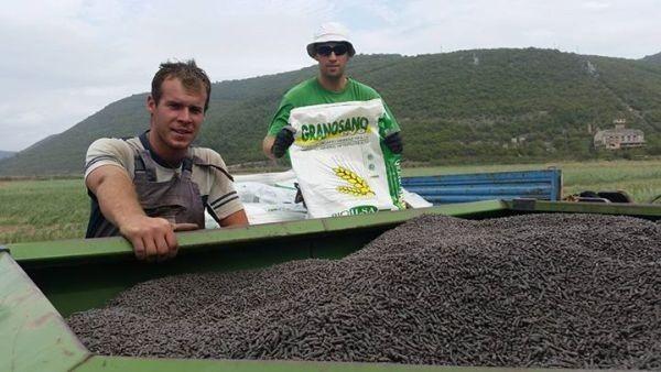 Gnojidba ozimih žitarica u eko uzgoju