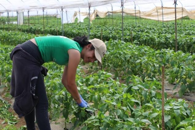 Švicarci u Slavoniji vide potencijal eko uzgoja