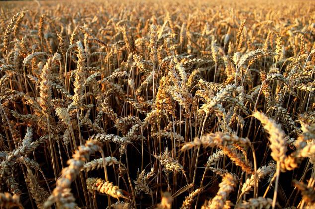 Ukrajina izvezla 7,5 milijuna tona pšenice