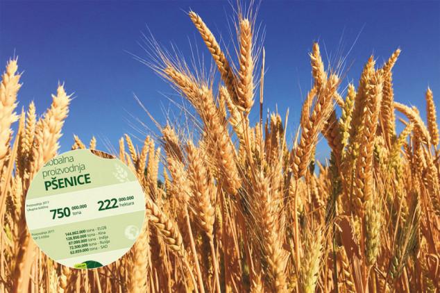 Tržište pšenice raste, a rekordni prinosi iznenađuju