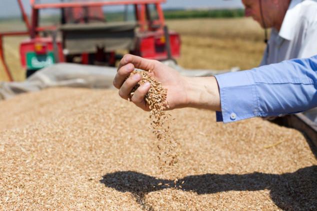 Povećane svjetske zalihe pšenice loše kvalitete