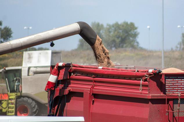 Velike zalihe pritisak cijenama žitarica