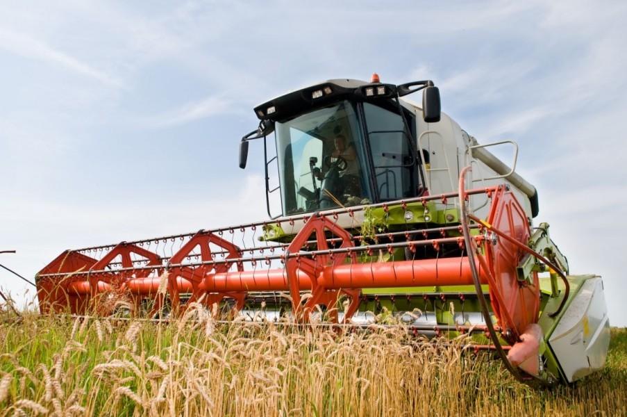 Otkupna cijena pšenice u blagom porastu