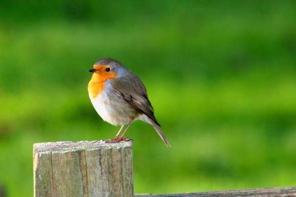 Vitamini kod ptica