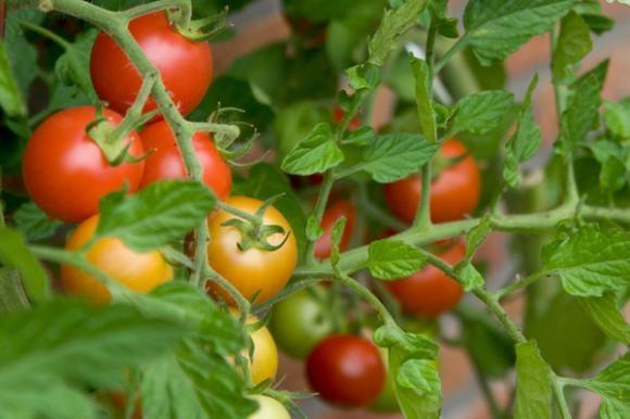 Mat Organsko Tekuće Gnojivo 3224 Povrćarstvo