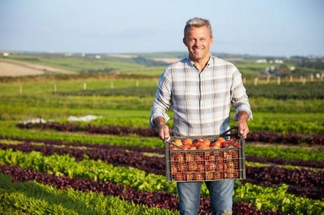 Kako protiv bolesti plodovitog povrća?