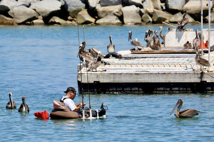 Dozvolu za rekreacijski ribolov na moru zatražite online