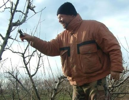 Priprema voćnjaka za zimu