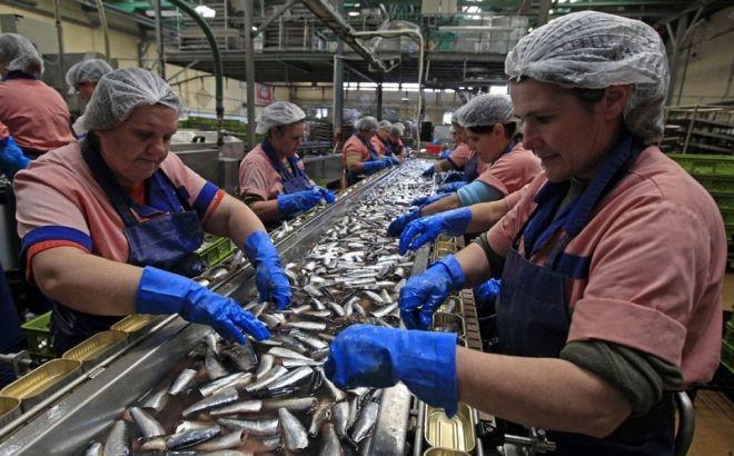 Kvota za izvoz ribe u EU i dalje 60 tona?