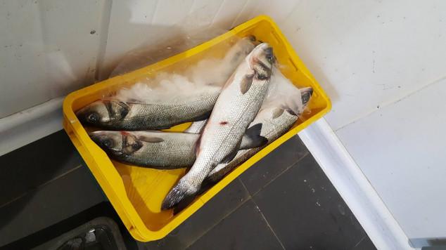 Pravilnik o ograničenju gospodarskog ribolova koćom
