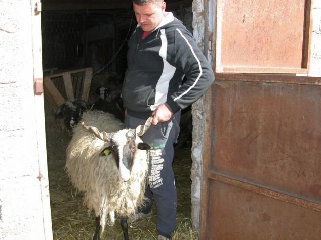250 eura po hektaru više za dalmatinske farmere?