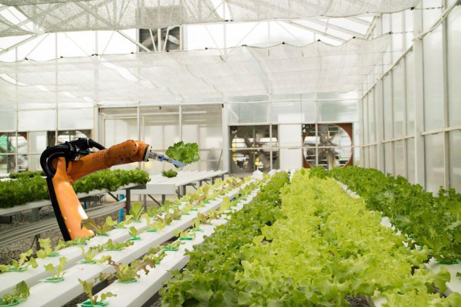 Roboti na poljima - budućnost EU poljoprivrede?