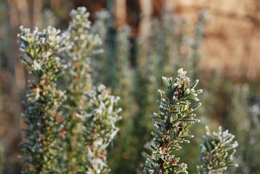Kako pomoći biljkama da dočekaju proljeće bez stresa?