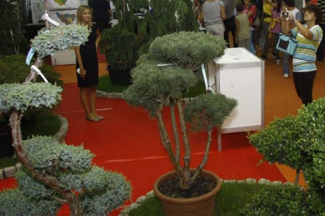 Hortikultura u oktobru na Novosadskom sajmu