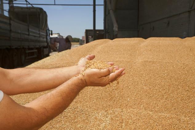 Egipat ipak kupio rusku pšenicu - cijena pada!
