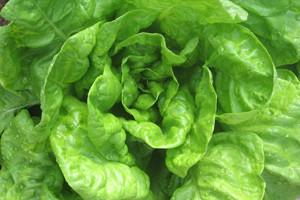 Plodoredom do većeg prinosa povrća