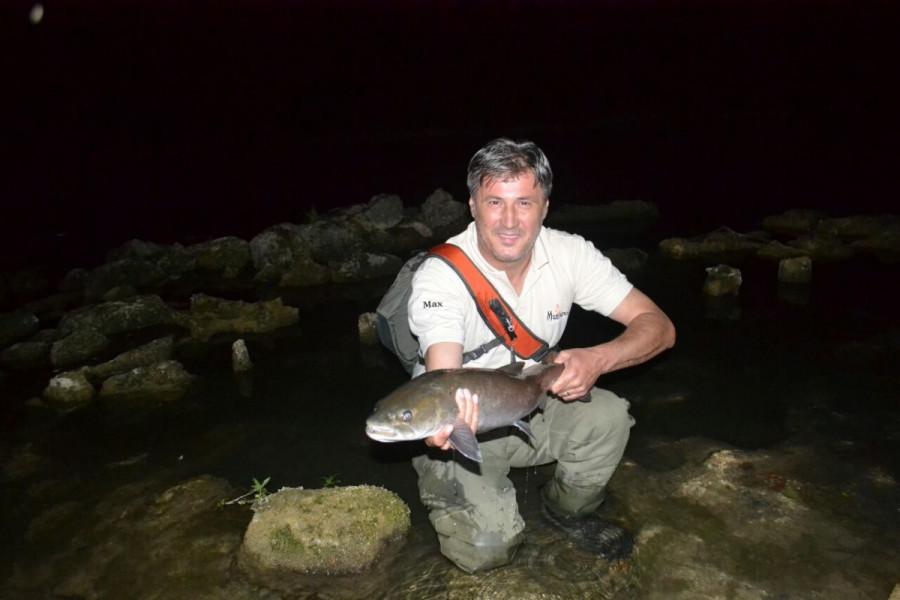 Revirom zaštitili kraljicu riječne ribe - mladicu