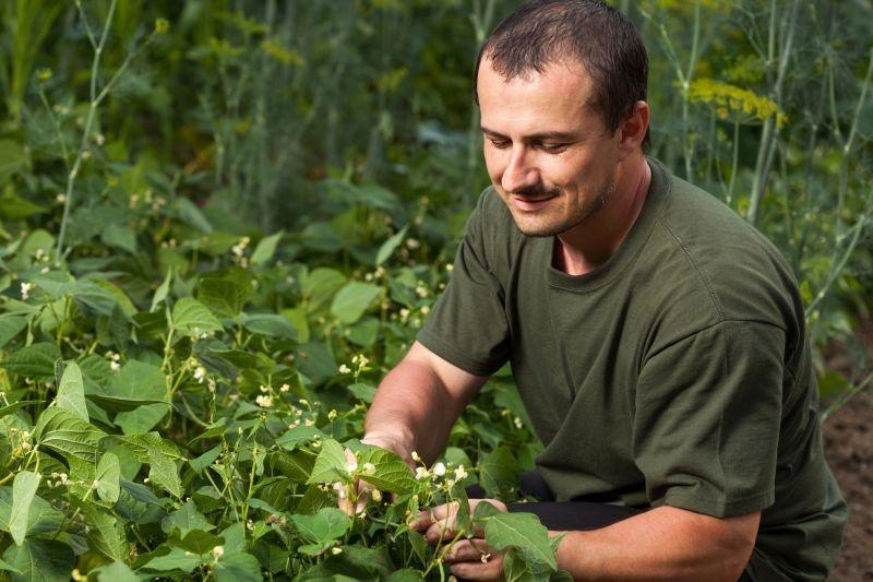 Biljke indikatori - obzirom na stanje tla