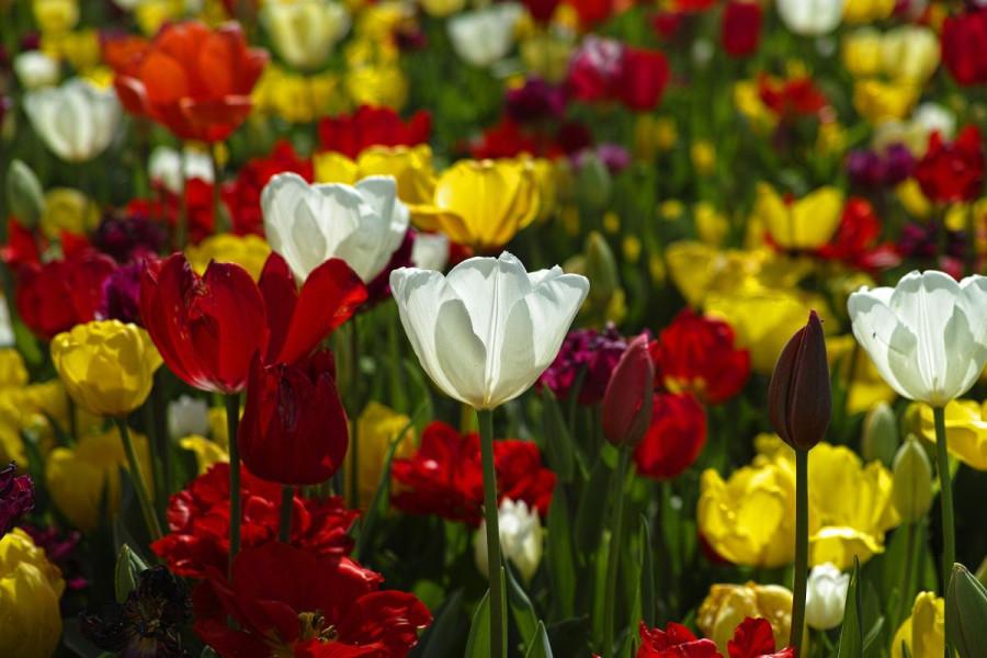 Prvi Vrtni sajam u Sarajevo City Centru