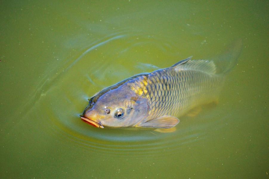 Kako se baviti gospodarskim ribolovom?