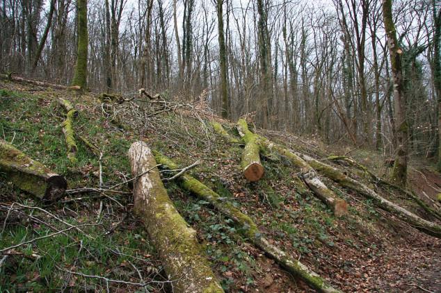 Poljočuvari nemoćni pred drvokradicama