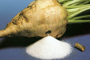 šećerna repa šećerna repa hit proljetne sjetve datum 22 01 2010 ...