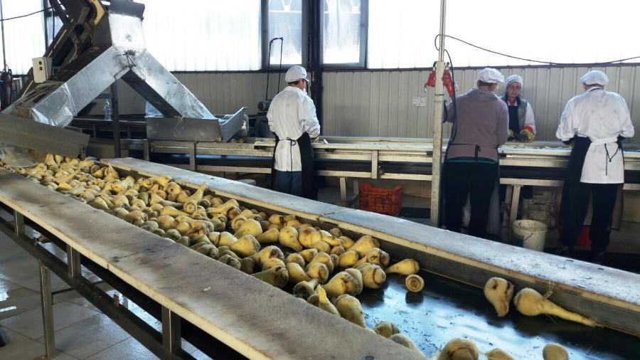 U Semberki se opet prerađuje sušeno povrće