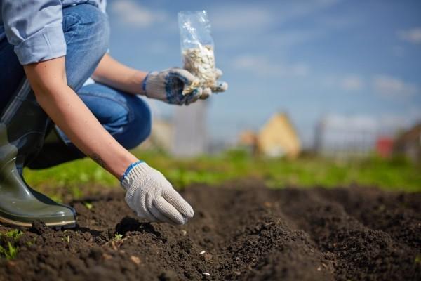 Rasadu biljaka planirajte i pripremite na vrijeme!