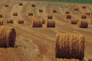 Državni poticaji samo za poljoprivrednu proizvodnju