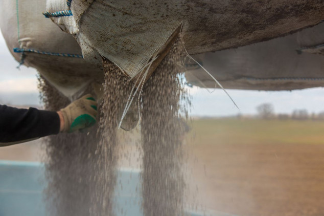 Odluke pred sjetvu pšenice