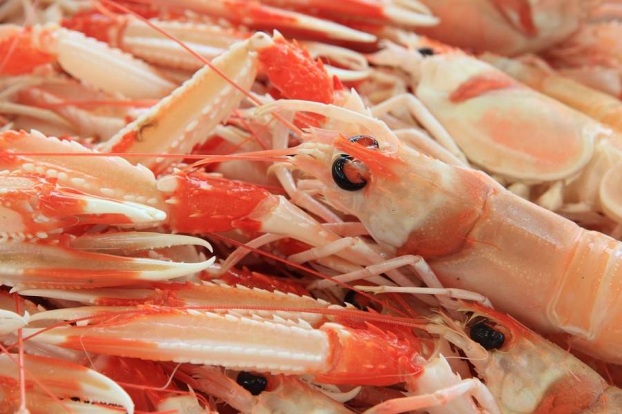 S tržišta povlače nizozemske škampe