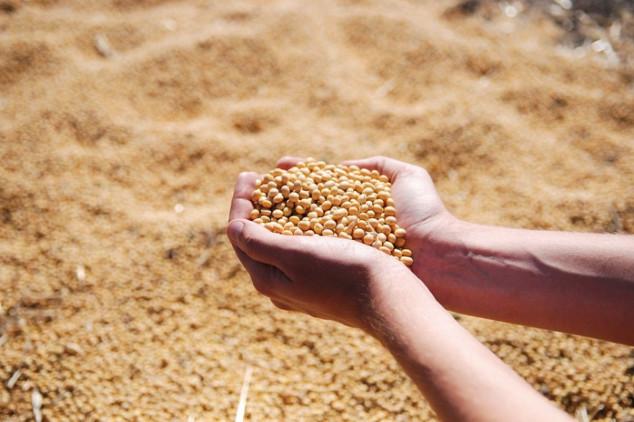 Topla obrada zrna za stočnu hranu