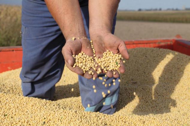 Rast cena uljarica i žitarica