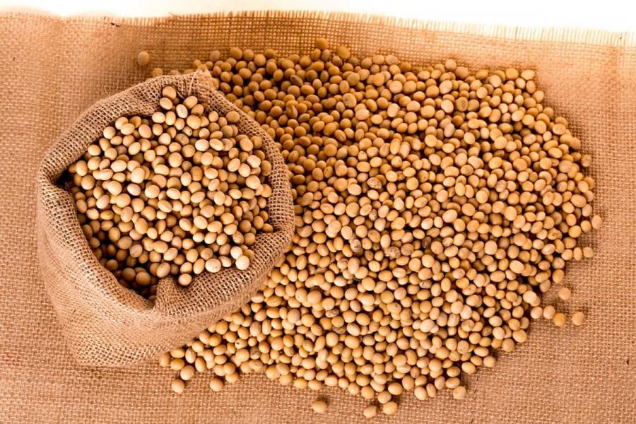 Pad cene soje