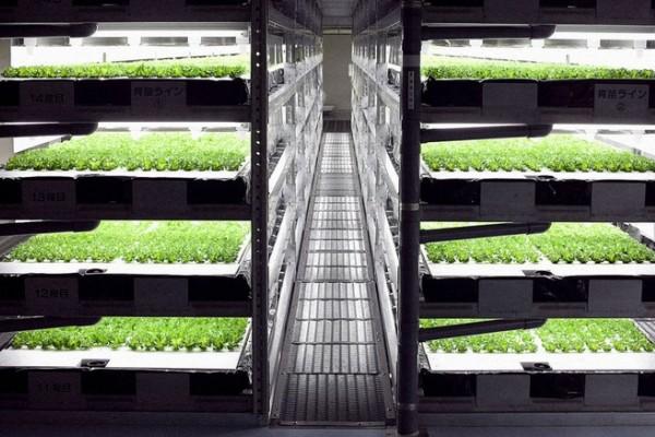Na najvećoj farmi salate radit će samo roboti!