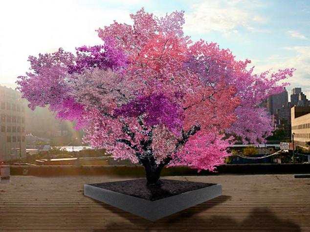 Jedno stablo, a 40 voćnih vrsta!