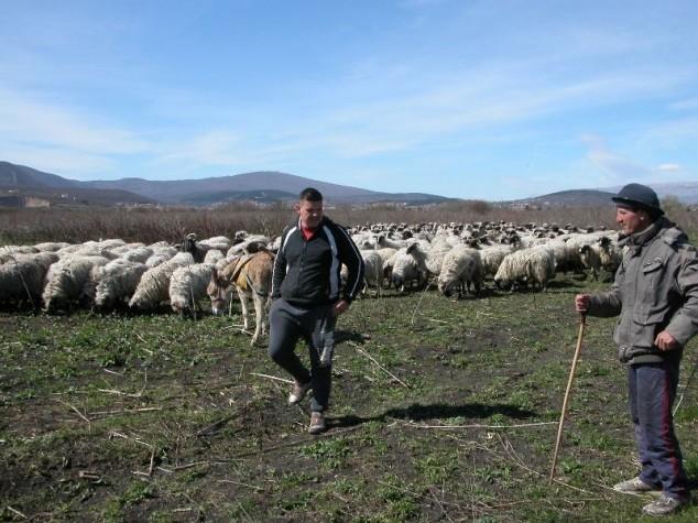 Ni P od pravednih poticaja u eko stočarstvu!