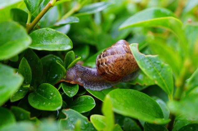 Najznačajnije bolesti i štetočine biljaka