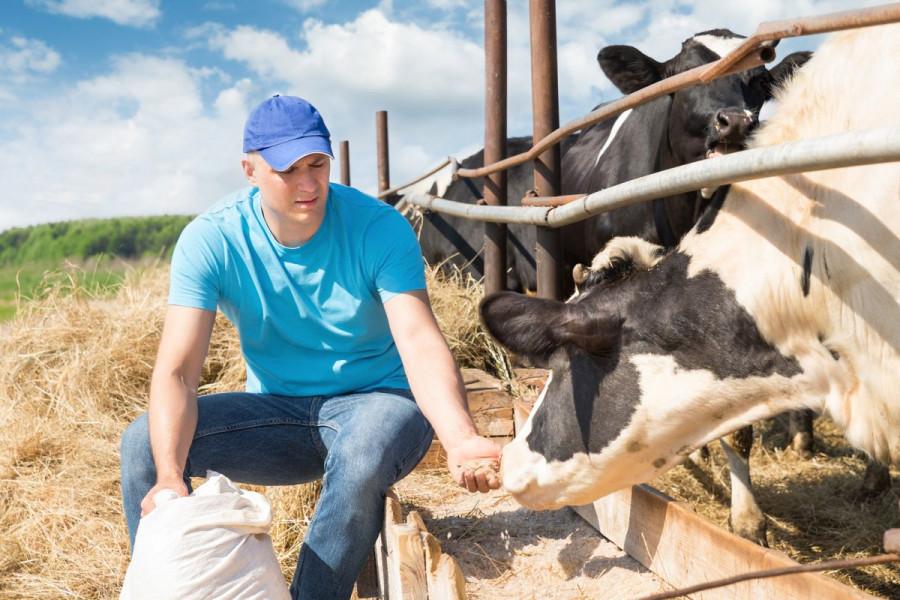 Suša će utjecati i na proizvodnju mesa i mlijeka