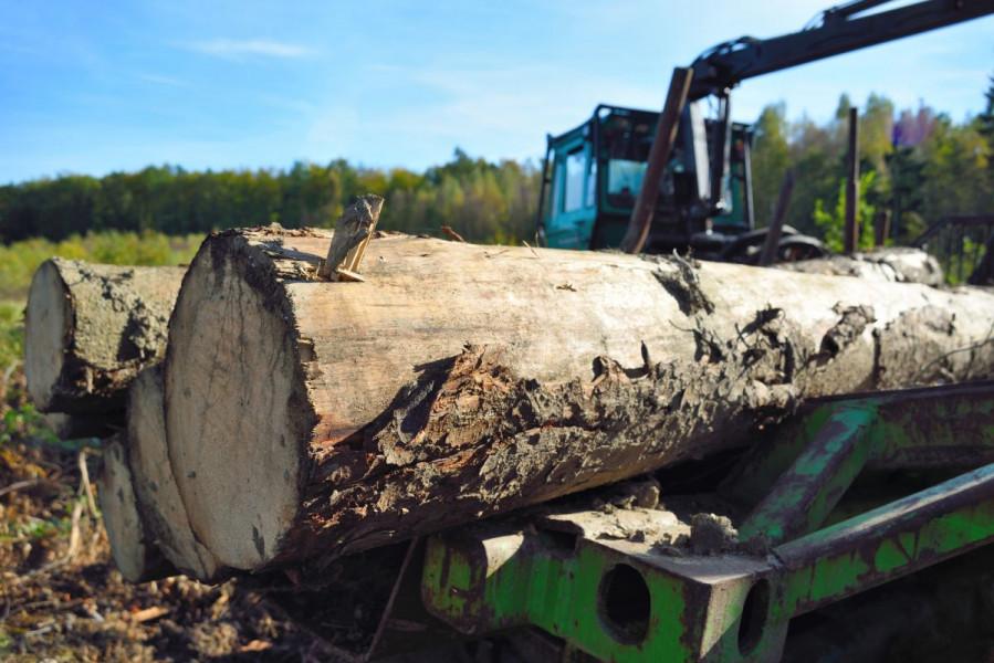 Prihvaćena iznimka za šume zbog rata